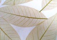 resina-fossil-leaf-green